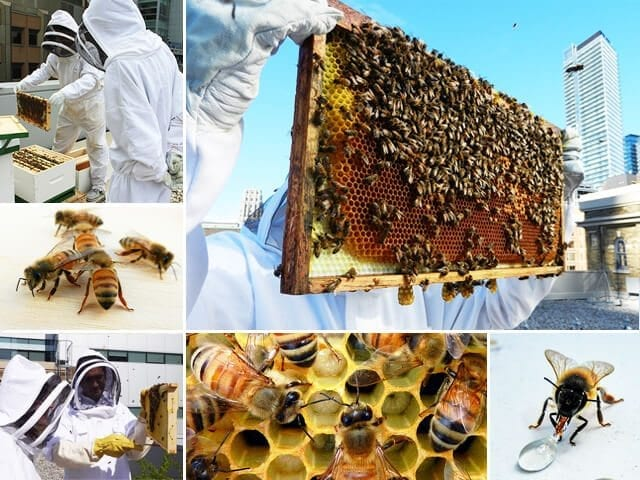 Bee Project: MaRS installs beehives on rooftop