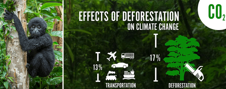 Infographic courtesy of Rainforest Connection