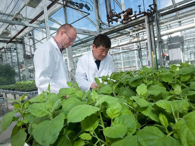 PlantForm turns tobacco plants into drugs to treat breast cancer, HIV-AIDS and the Ebola virus