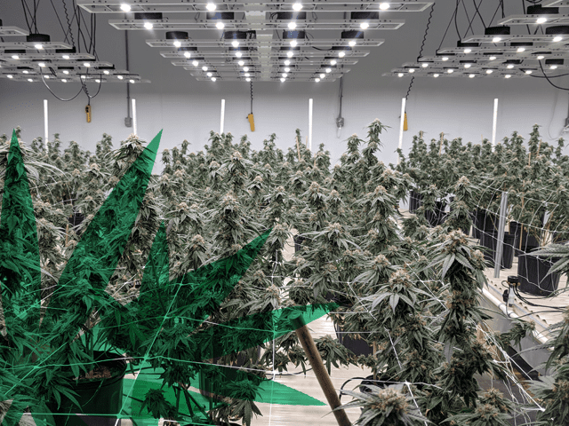 Growratio sees reward in cannabis's cleantech challenges